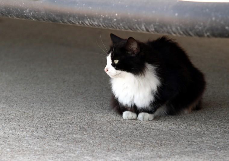 Cove feral cat ordinance