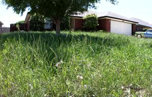 Tall grass in Killeen