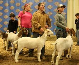 Coryell County Youth Fair