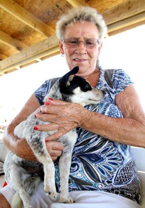 Texas Humane Heroes adoption event