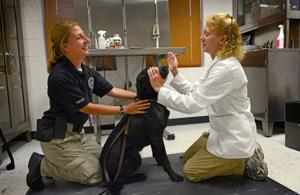 Law enforcement dogs
