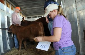 Bell County Heifer Validation