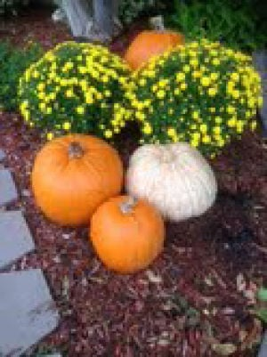 Pumpkins: Pumpkins and gourds make great fall decorations. Use them indoors or outside for colorful displays. - Photo by Darla Horner Menking | Herald