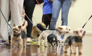 Copperas Cove Pet Vaccinations