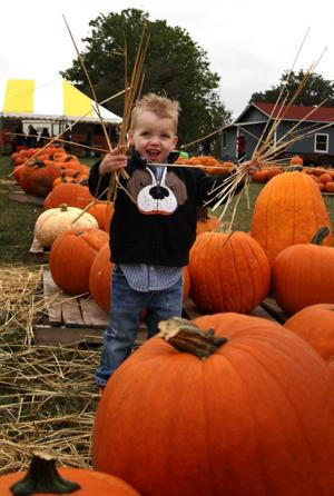 Pumpkin Patch in Harker Heights