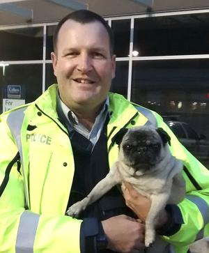 Curious case of missing pug ends happily
