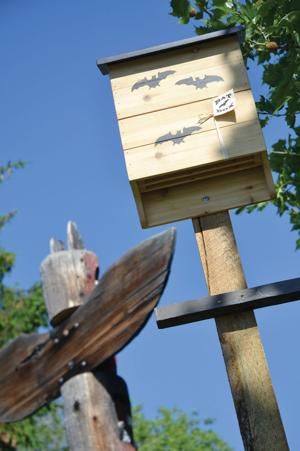 'Bat-chelor' pads erected in time for mating season