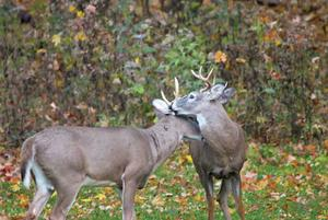 Rifle proposal latest assault on deer hunting by DNR, NRC