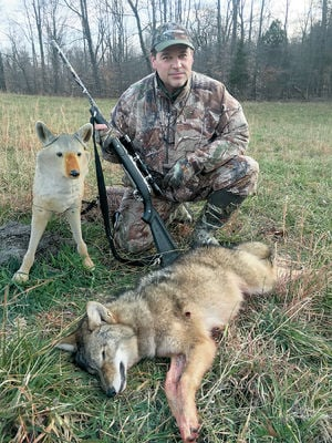 Coyote hunting controls numbers