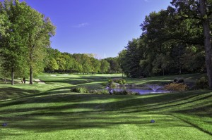 Bellerive Hole  17  Gold Tees.jpg