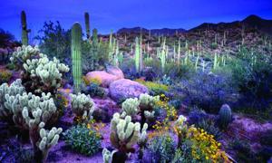 sh-mueller-Arizona_1028.jpg