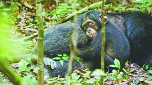 movie-chimpo_0427.jpg