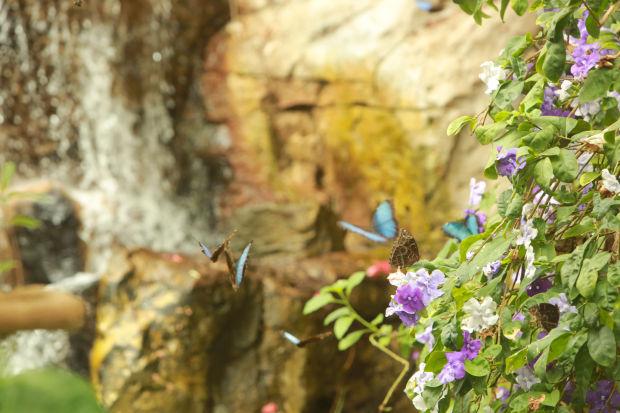 ButterflyHouse