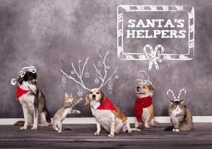 holidaycrds-FiveAcres_110212 animal shelter.JPG