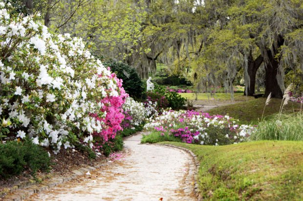 Middleton Place Wood Nymph with Azaleas.jpg