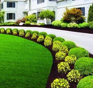 home3-lawn_0909.jpg
