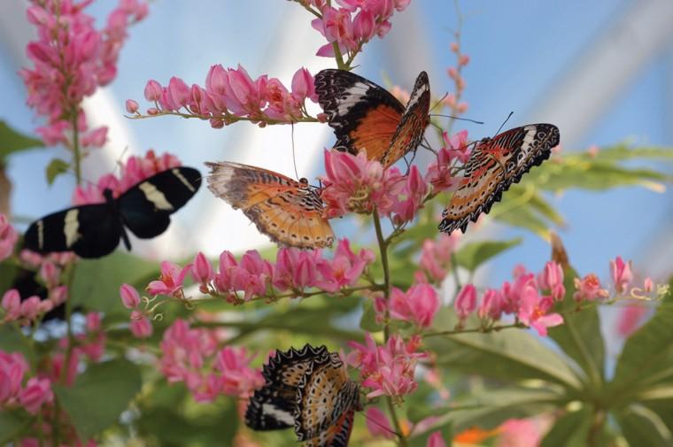 lil7-ButterflyHouse3_0525.jpg