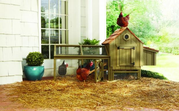 10 Arhaus Chicken Coop.jpg