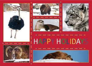 St Louis zoo holiday card