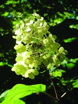 rosen-hydrangea_1028.jpg