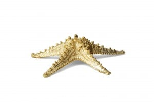 7 Aerin_Thick Starfish.jpg