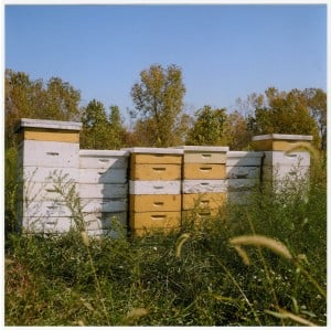 PI Bee Sanctuary STILL.jpg