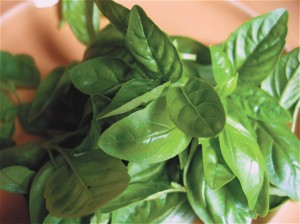 spicy_Basil_0706.jpg