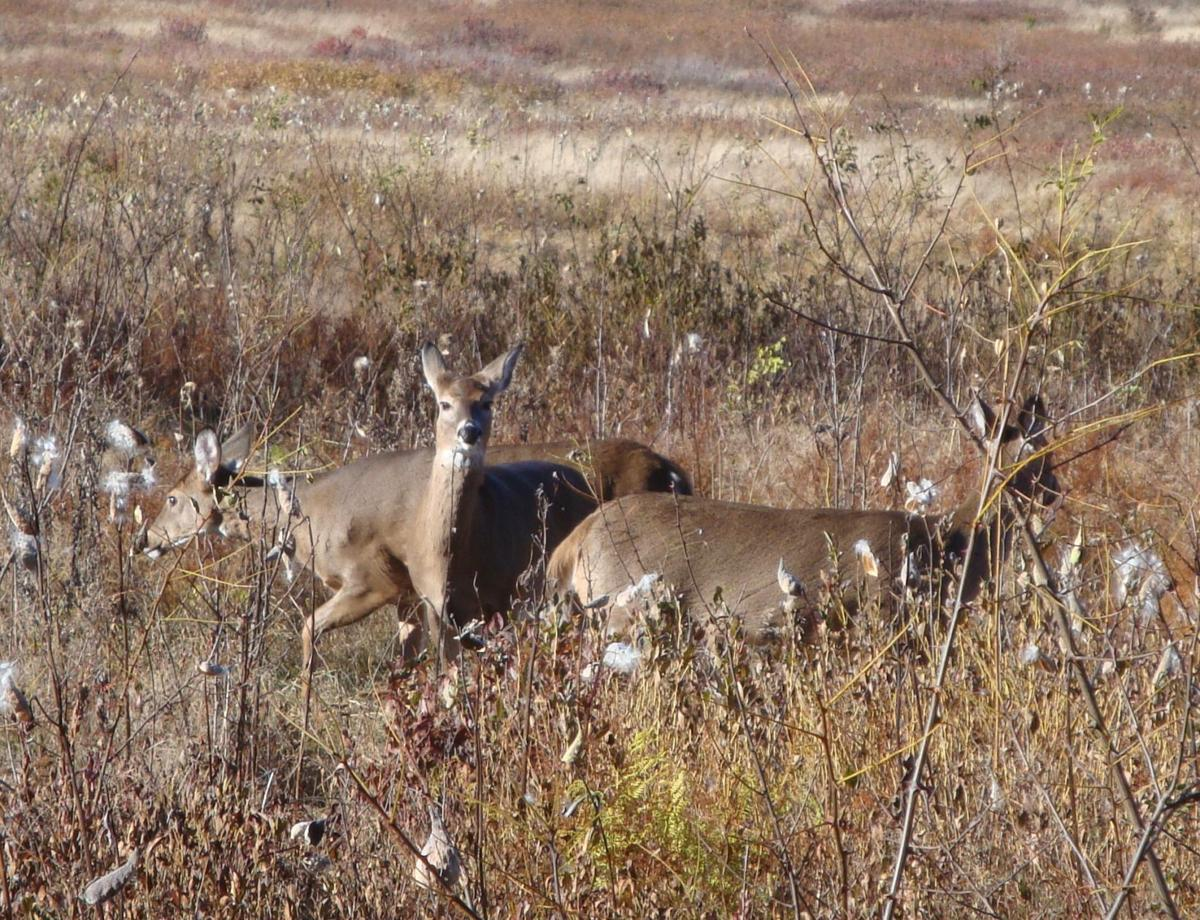 Pa hunting licenses go on sale monday doe tags up for for Pa fishing license fees