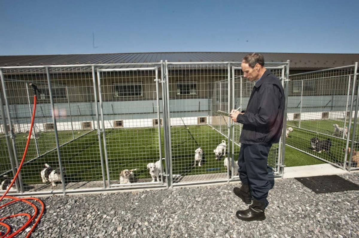 Animal Health Dog Kennels