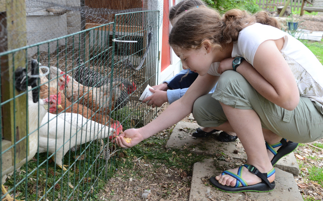 sydney esch feeds the chickens in her family 39 s backyard chicken coop