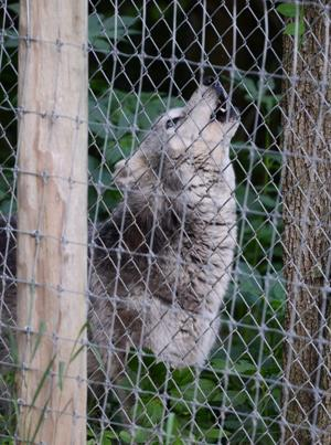 Wolf_Sanctuary_008.jpg