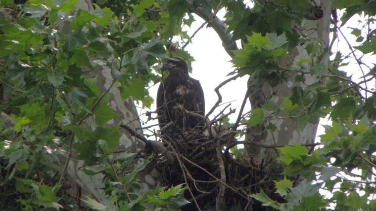 Lancaster County big reason for record Pennsylvania eagle ...