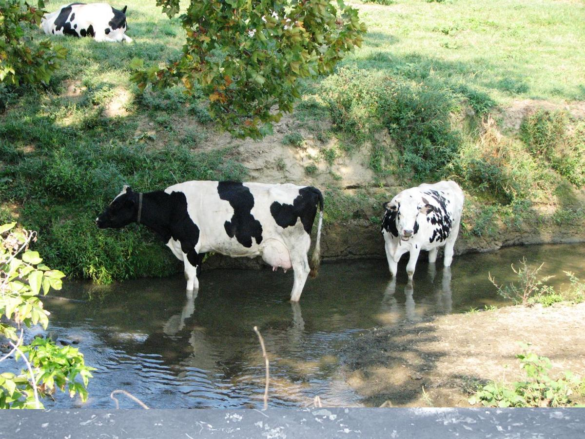 Report Pennsylvania Needs To Step Up Farm Runoff