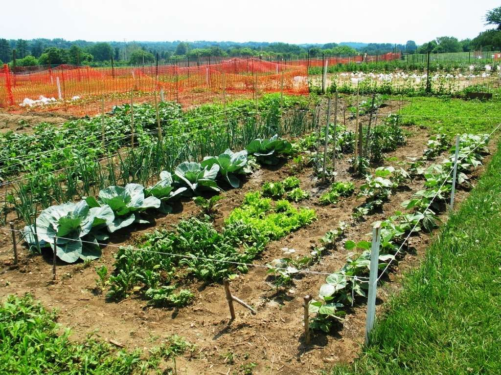 Think Spring Rentals Begin For Central Park Garden Plots