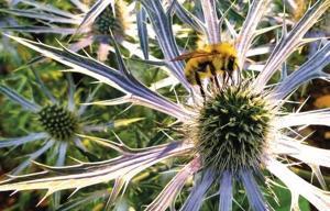 Beekeeping helps with understanding of plants