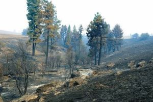 Fires leave livestock feed in short supply