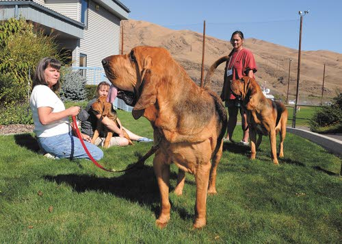 Top bloodhounds nose into Clarkston