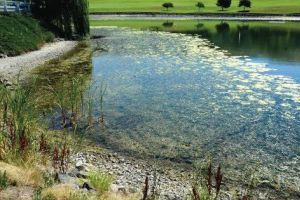<p>The main water pond at the Lewiston Golf and Country Club has a large bloom of algae that has at least one neighbor calling for public health officials to solve the problem.</p>