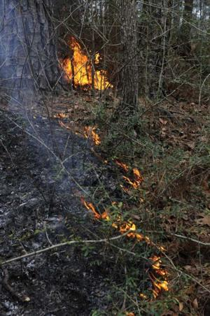 Forest Fire Protection and Use