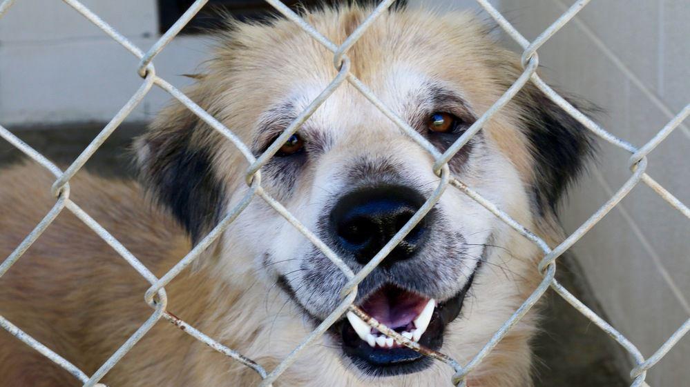 Dog Adoption Scams Online