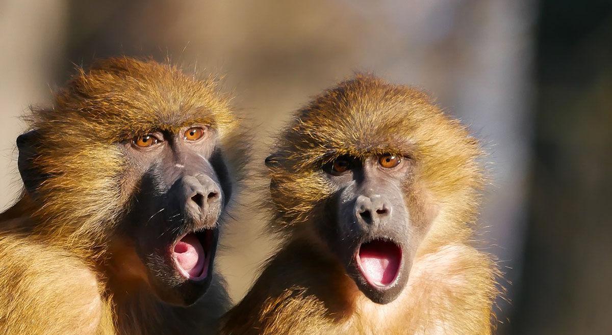 Scott Hollifield: Monkey Action News Team lands new corporate sponsor