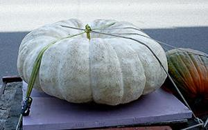 714 lb. pumpkin grown by Terry Johnson