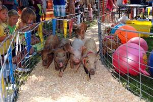 Garrison Play Days - pig races