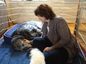 Weekend Workshop Teaches New Acupoint Treatment for Dogs