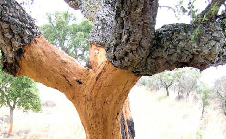 Wandering Into The Storied Cork Trees Takes A Wine Lover To A Surprising Place