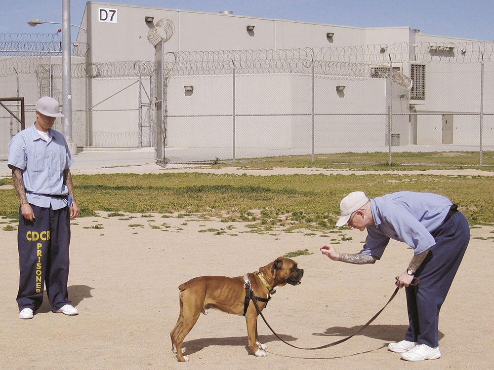 SPCA for Monterey County launches new foster pup program at ...