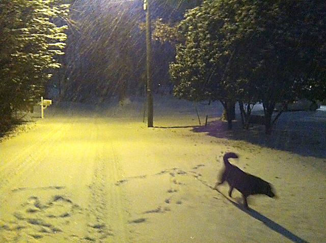 thomas snow 3).jpg
