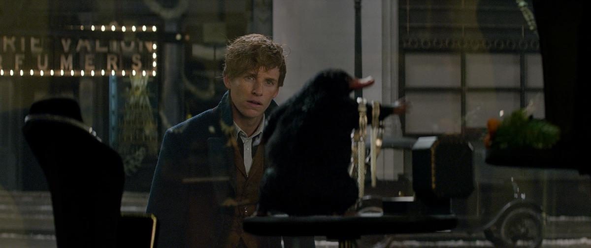 Resultado de imagem para fantastic beasts and where to find them stills