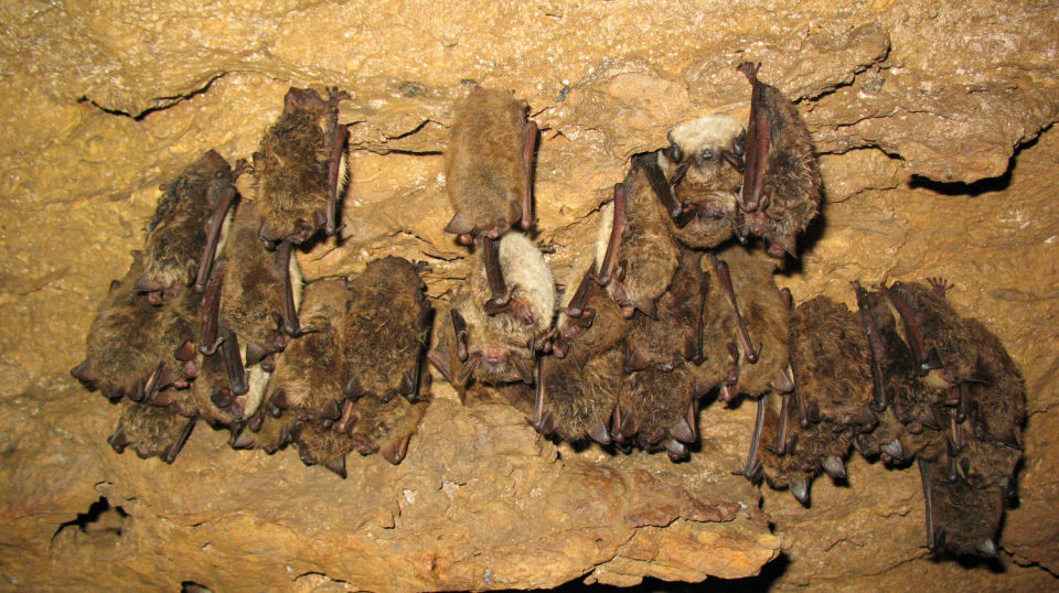 Bat encounter prompts change in policy danville for Virginia fish and game