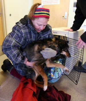 Badly neglected dog team rescued in Alaska village